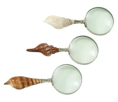 Assorted Seashell Handle Magnfier