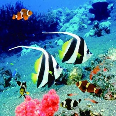 Fiberglass Undersea Fish Wall Decor Globe Imports