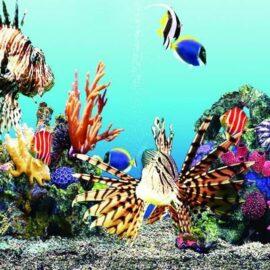 Fiberglass Undersea Reef Wall Decor
