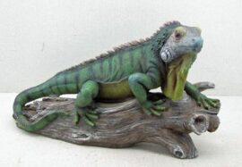 Iguana on Limb