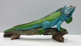 Iguana Stretching on Branch