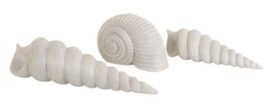Set of Three Seashells