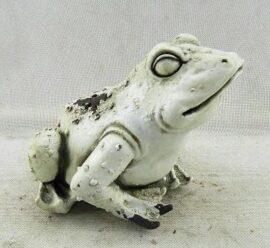 Light Color Garden Frog