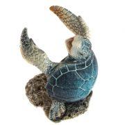 WW-401-Blue-Turtle-Holder