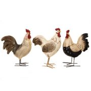WW-431Roosters-10-18-0894-2-5234