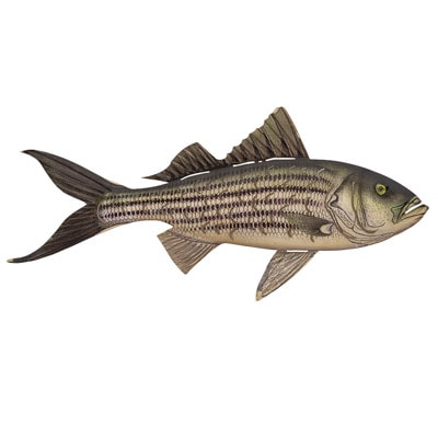 Metal Fish Wall Decor