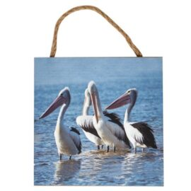 W-8957-Pelicans_8718