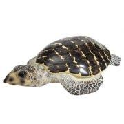WW-514-Brown-Turtle3-20-2724