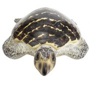 WW-514-Brown-Turtle3-20-2726