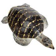 WW-514-Brown-Turtle3-20-2731