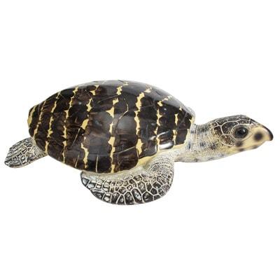 WW-514-Brown-Turtle3-20-2732