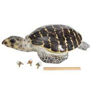 WW-514-Brown-Turtle3-20-2735